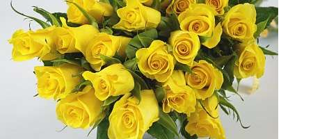 Meaning Of The Yellow Rose Flower Experts Gives You Tips And Advice