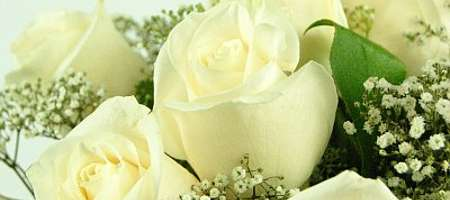 Meaning of the white rose flower experts gives you tips and advice meaning of the white rose mightylinksfo